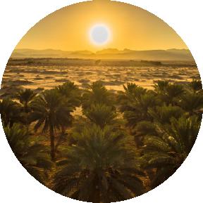 sunrise dates field kibbutz lotan