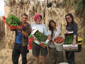 kibbutz lotan gardening