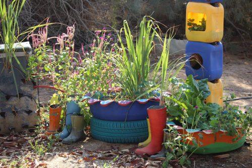 container gardening kibbutz lotan