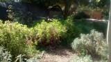 גן בית