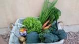 סל ירקות