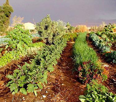 גן בית – הגינה האורגנית לימודית